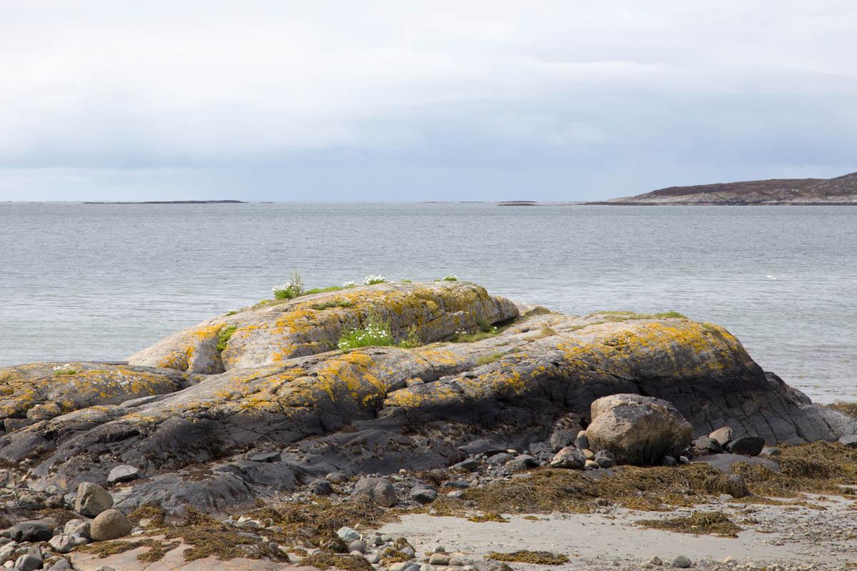 Linesøya